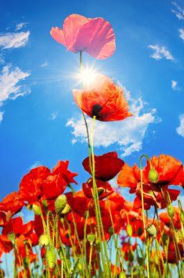 descargar mensajes de buenos dias para mi amor, nuevas palabras de buenos  dias para mi