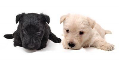buscar mensajes cariñosos para mis mascotas cabinas net