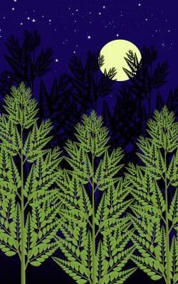 Buscar Bonitos Mensajes De Buenas Noches Para Celulares | Frases De Buenas Noches
