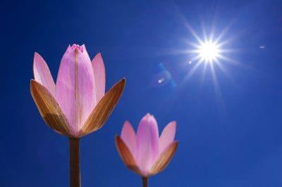 Frases De Buenos Dias | Saludos de Buen dia